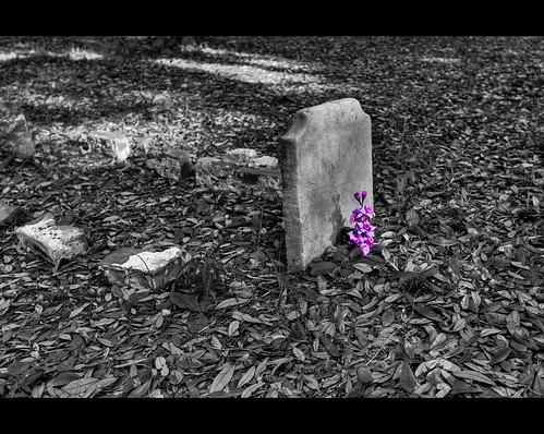flowers shadow grave graveyard leaves landscape nc bricks tripod northcarolina southport hdr gitzo photomatix 7exposure arcatech gt2531 oldsmithvilleburyingground nikonafsnikkor1635mmf4gedvr misseliza