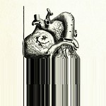 Heart anatomy 05