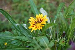 Pretty Yellow Flower