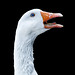 Just a Goose by John Wilhelm is a photoholic