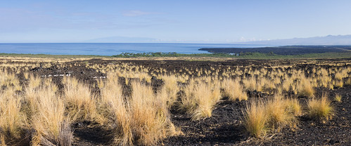 scenic point on Hwy 19, Big Island, Hawai'i (panorama)