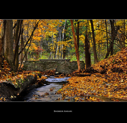 autumn fall rural creek october stream fallcolor seasonal fallfoliage changing upstatenewyork fallenleaves albanyruralcemetery stonebridge oldbridge goldenleaves shobeiransari