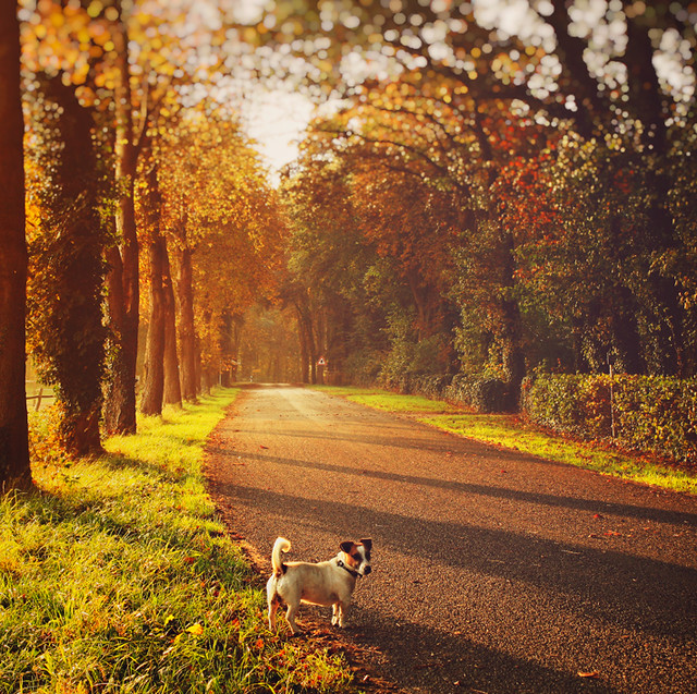 You think dogs will not be in heaven i tell you they will be there