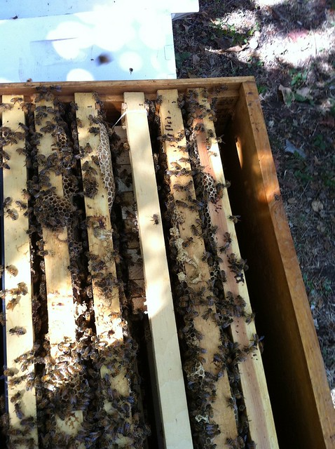 queen bank placed in hive