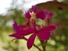 Orquídea by Denise Molla