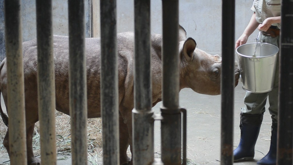 金沢動物園のクロサイ「フウカ」(雌)ミルクタイム20110924_151912_