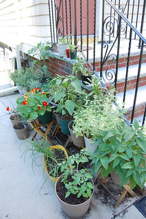 Green Container Garden in July