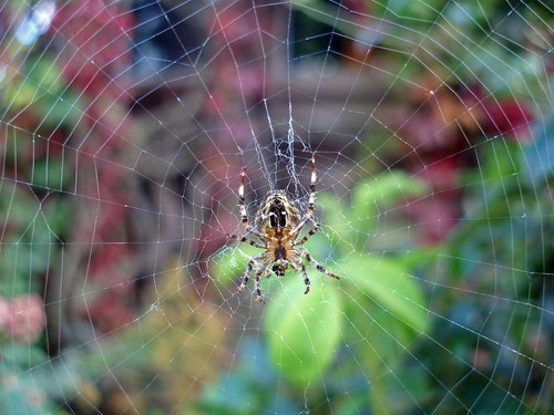 closeup insect spider bokeh web