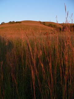 Prairie Grass | by USFWS Mountain Prairie