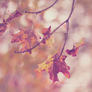 .Autumn is a second spring when every leaf is a flower.  ~Albert Camus~