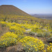 Pinacate Biosphere Reserve