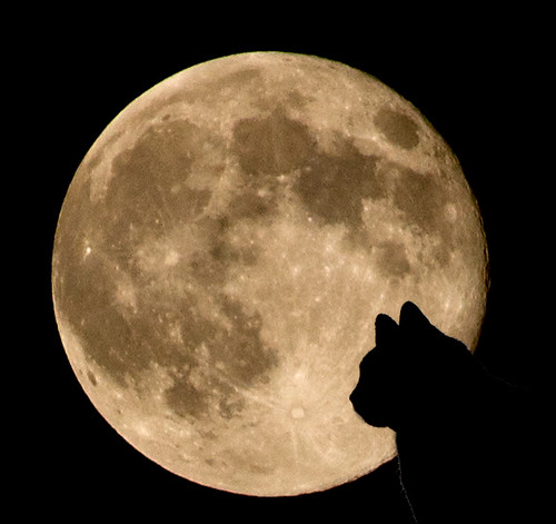 california autumn light sky usa moon fall night cat losangeles sony harvest kitty september fullmoon telephoto tuxedocat southerncalifornia orangecounty dslr harvestmoon irvine 2011 moonrising a500 sonyalphadslr sal70300g catandmoon kartikjayaraman