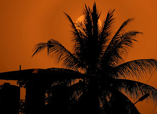 Palm in the Sunset,,