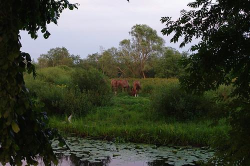 horse nature river landscape estonia pentax eesti loodus jõgi k7 õhtu soomaa evenung maastik hobune viljandimaa hobused soomaanationalpark soomaarahvuspark pentaxk7 hallistejõgi doubleniceshot