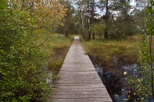 path to paradise @ Hoge Veluwe National Park