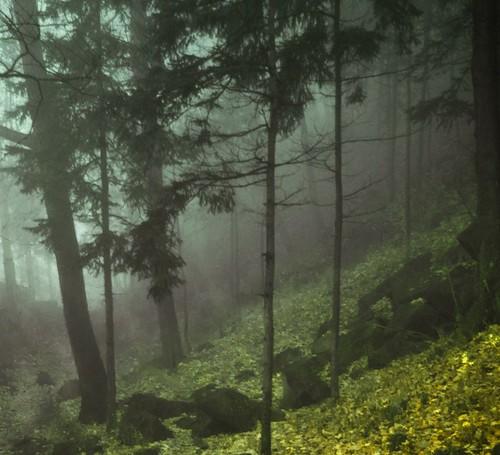 jaune automne montréal arbres centreville brume parcdumontroyal jauneetvert feuillesmortes