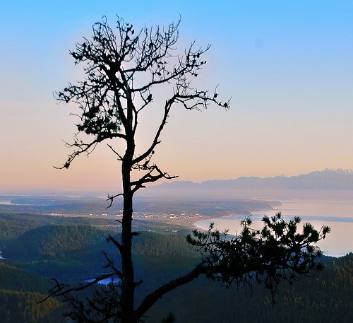 sea mountain lake tree fog island washington pacificnorthwest