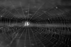 1111 Web