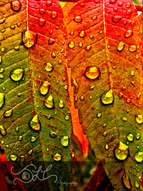 Raindrops on Fall Leaves | Flickr - Photo Sharing!