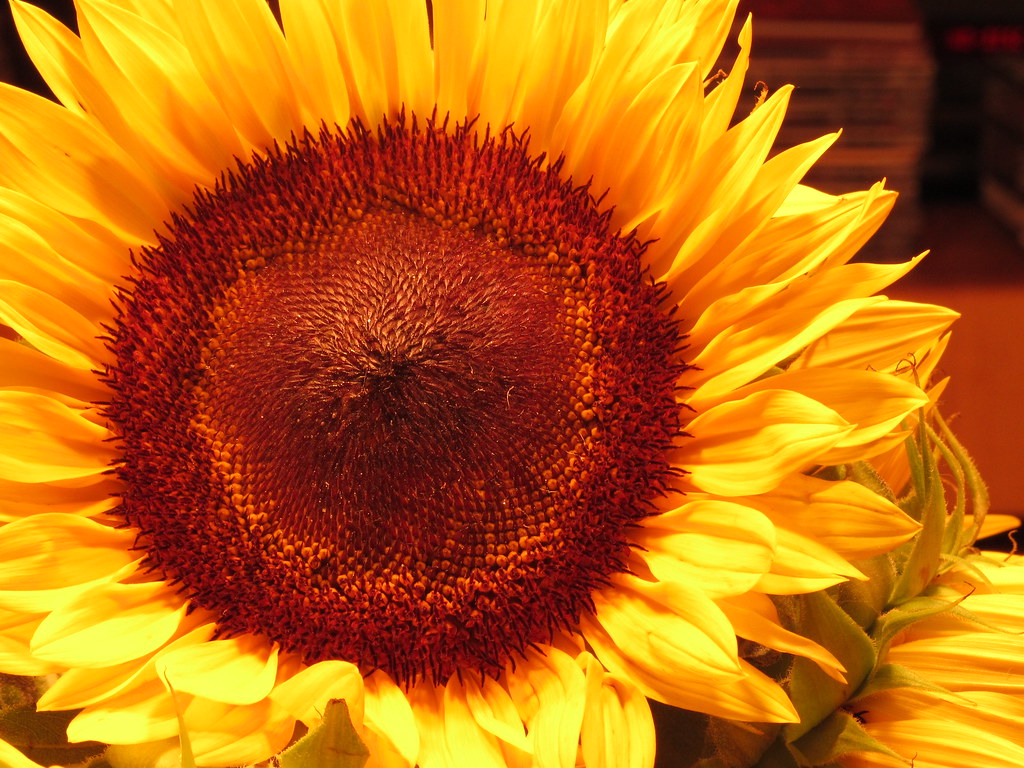 IMAGE: http://farm7.staticflickr.com/6167/6228414996_9a460ec91e_b.jpg