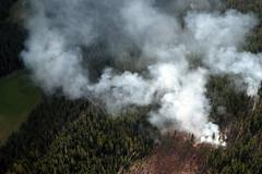 wildfire(0.0), field(0.0), fire(0.0), soil(1.0), smoke(1.0), forest(1.0),