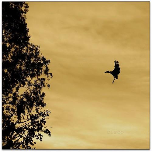 sunset sky bird clouds square landing cisco zen soul uganda kampala controluce 500x500 presenze atterraggio soulsound eos5dmarkii bestcapturesaoi elitegalleryaoi thesoundofsunshinemichaelfranti