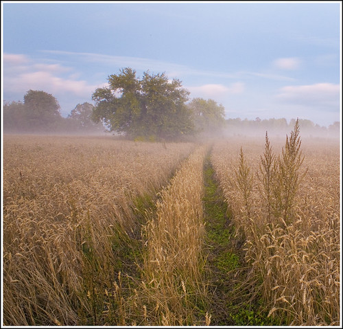 summer tree field fog landscape evening estonia path supershot sailsevenseas sailsevenseasmaster
