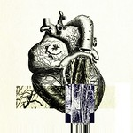 Heart anatomy 06
