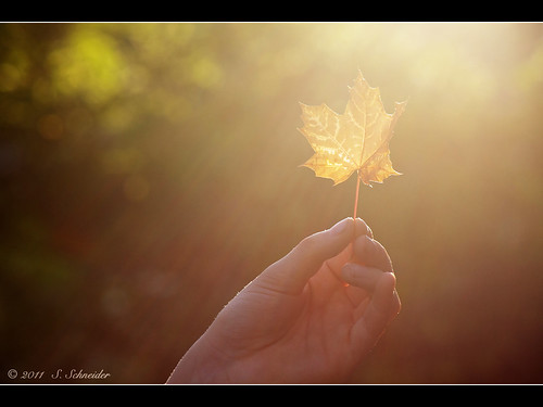 Herbstlicht | The Light of Autumn