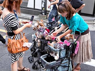 Dogs in Strollers in Harajuku
