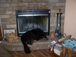 Zadie pet dog border collie, foster dog program