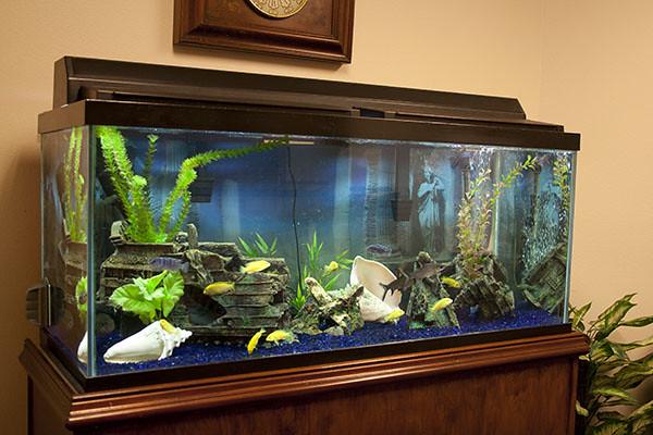 Custom fish tanks aquariums installation sarasota florida for Custom fish tanks