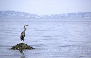 Heron and the skyline