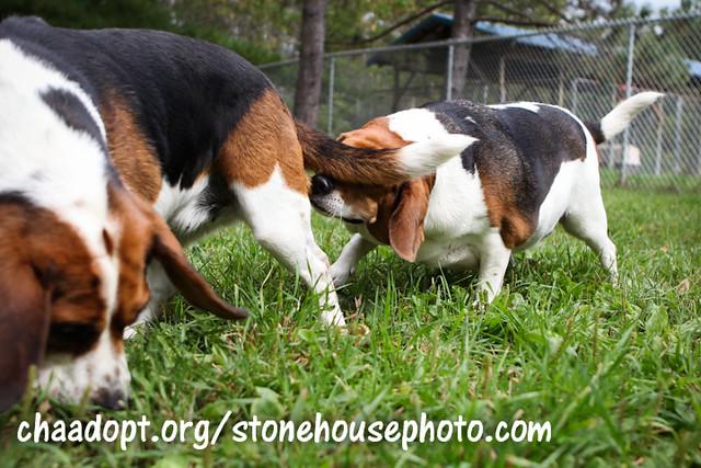 Dogs Homes Near Warrington