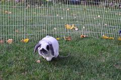 2011 09 20_bunnies 9-20-2011-1_7370