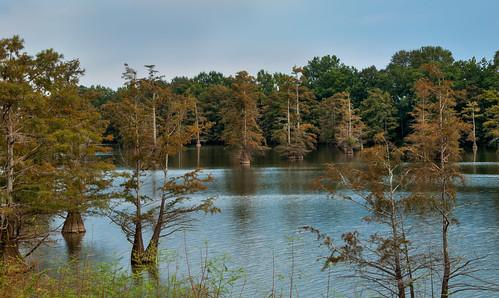 lake mississippi cypresstrees hwy49 mississippidelta beelake eadenmississippi