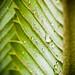 rocio / condensation