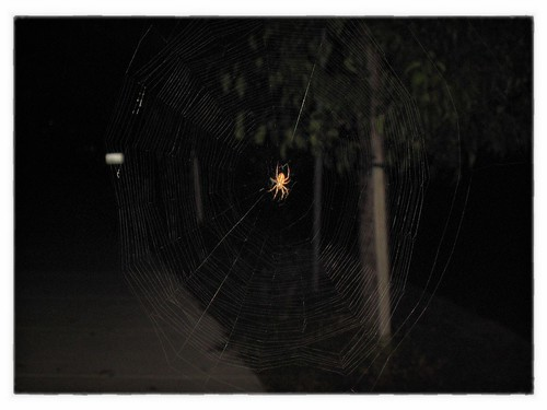 Little friend on our morning ( yes, morning even though it's pitch black out still) walk.