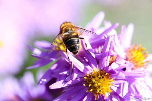 Blume by martinnocker