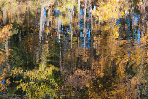 autumn trees reflection tree fall nature water forest landscape pond scenery waves wave foliage