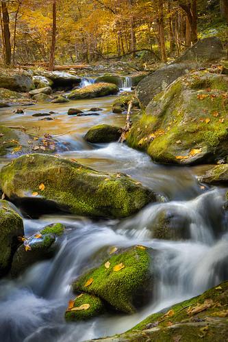longexposure fall beautiful creek moss stream fallcolor smokymountains tremont greatsmokymountainsnationalpark fallcolour gsnp tremontroad thiswateriscold wherearemyboots