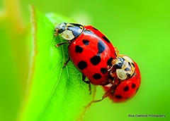 arthropod(1.0), animal(1.0), ladybird(1.0), organism(1.0), invertebrate(1.0), insect(1.0), macro photography(1.0), fauna(1.0), close-up(1.0), beetle(1.0),