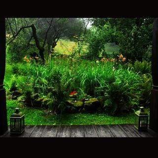 Rain in paradise