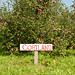Cortland Apple Tree at Champlain Orchards