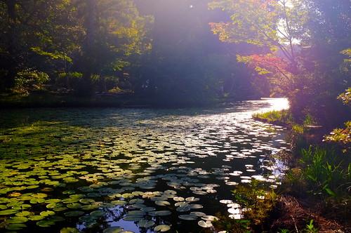 星野村・麻生池