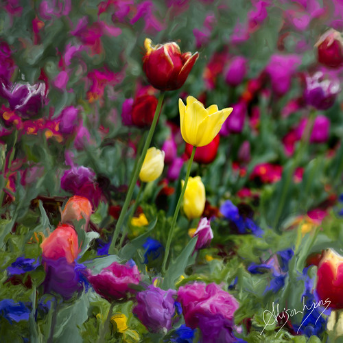 A Field of Colour  [ detail ] by alison lyons photography