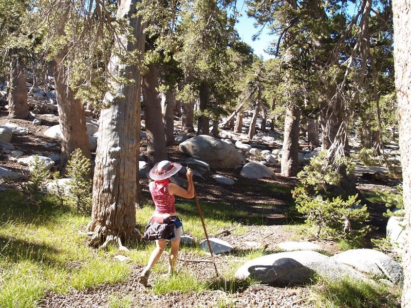 Newton Drury to Marion Mountain Bushwhack