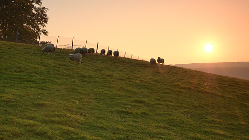 sky sun animals backlight sunrise landscape tiere sheep wiese himmel 09 landschaft sonne wald sonnenaufgang gegenlicht schafe cokin ndgrad 121s