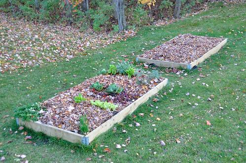 Garden boxes Oct 16