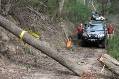 track(0.0), logging(1.0), trail(1.0), soil(1.0), vehicle(1.0), tree(1.0), off-roading(1.0), forest(1.0), jungle(1.0),